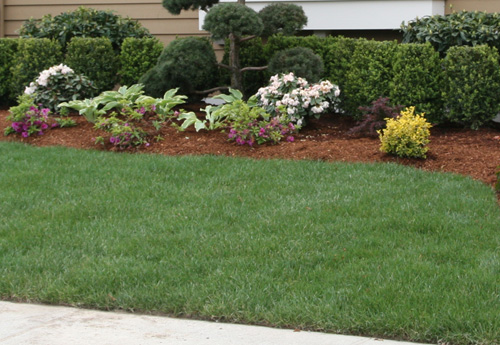 Pictures Of Landscaping Bushes Pdf